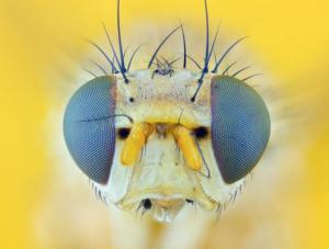 La Drosophila Melanogaster, la creativitat i la psicologia ecológica. Joan Miquel Chacon