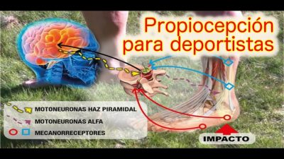Propiocepción. Rutina de ejercicios propuestos en el baloncesto y aplicables a múltiples deportes